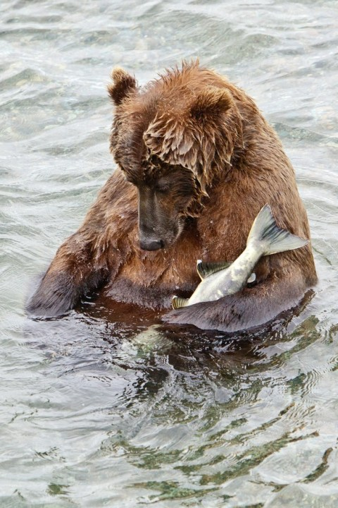 It's a sad day when fish are held captive - by human's, not wildlife