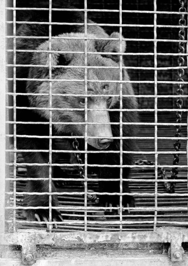 Masha bear cage