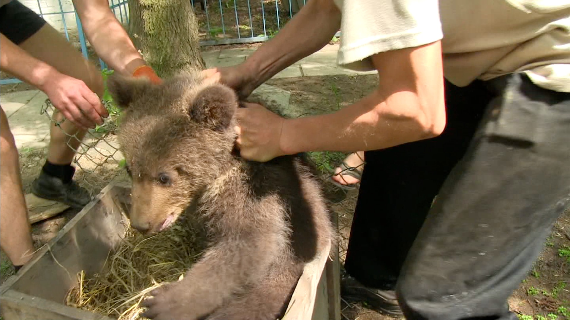 Royal Canin Accused Of Sponsoring Brutal Amp Illegal Bear