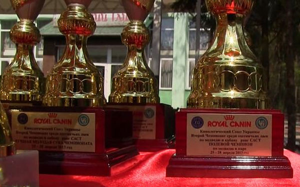dog trophies sponsored royal canin bears ukraine