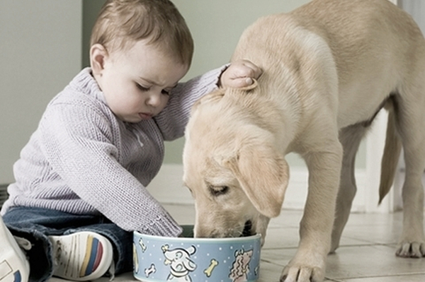 photo_of_baby_with_puppy touching pet food