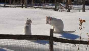 Friskies, Purina cat foods recalled for Salmonella contamination