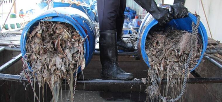 unloading_trashfish_songkla-3