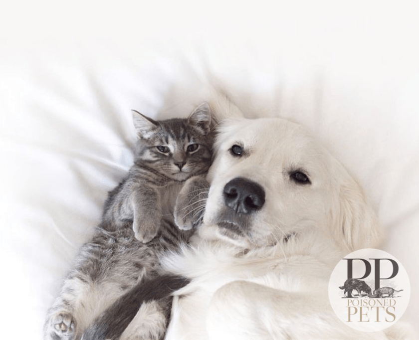 dog-and-cat-snuggle-on-bed