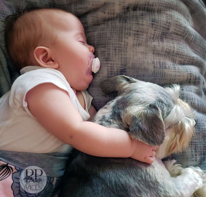 baby napping with dog