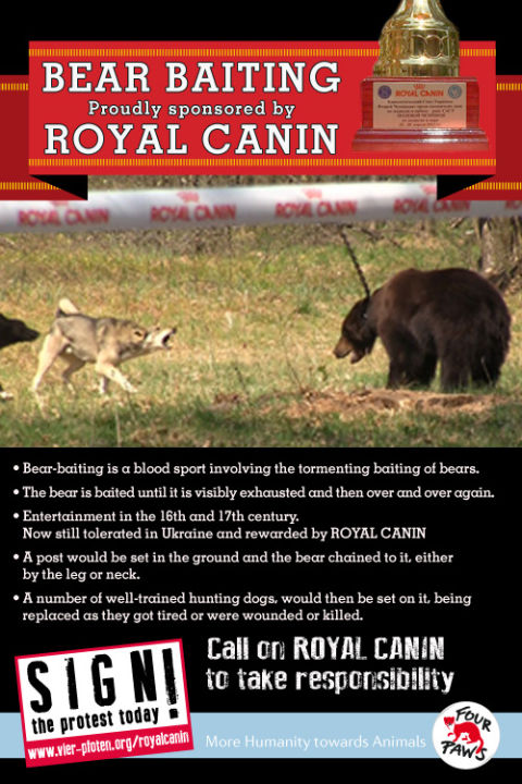 4PF_Royal_Canin_7-13_eng_RZ