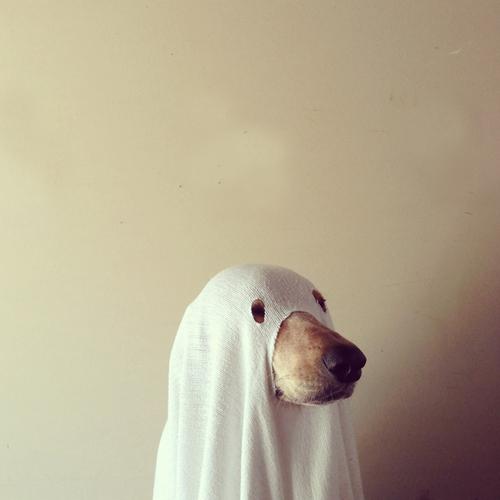 A DIY pet costume for Halloween
