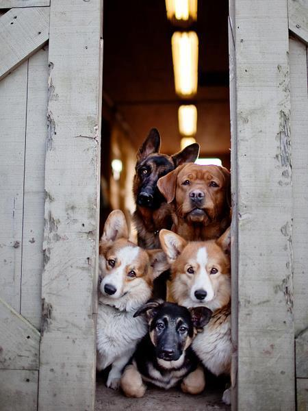 dogs peeking out behind doors