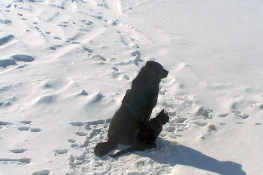 Black_Dog__Black_Cat_snow