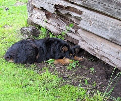 Dog on Mole Patrol