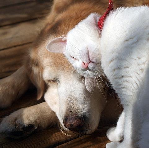 Dog cat head butt best friends