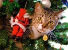 Hey, man I'm just hangin with Santa