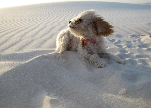 dog on windy beach