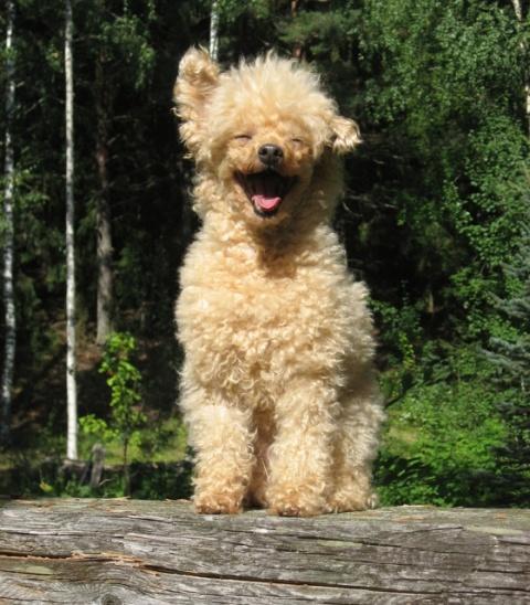 happy sun dog
