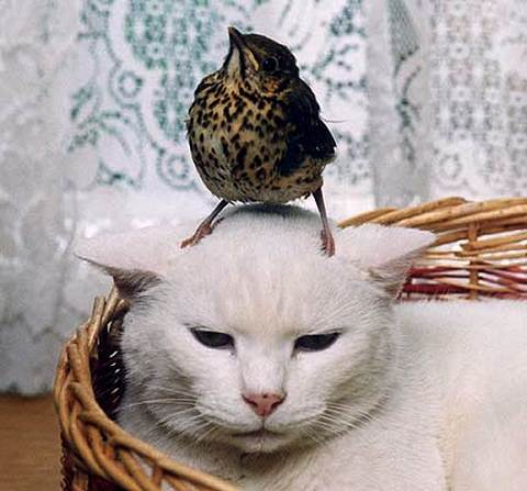 bird-on-cats-head