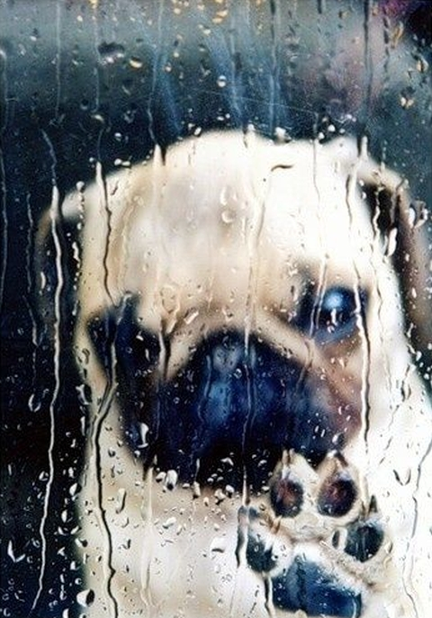 cold rainy day dog inside looking through glass