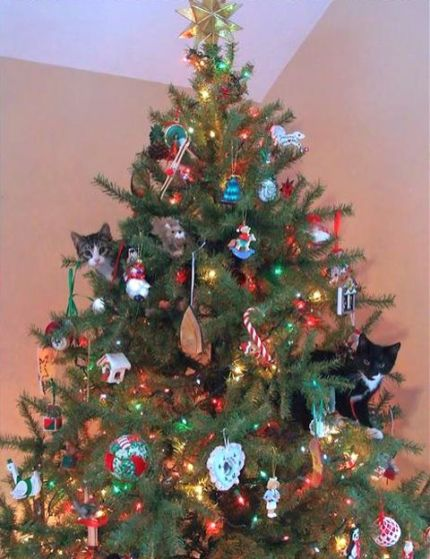 funny-pictures-kittens-will-destroy-your-ornaments