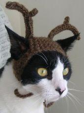 reindeer-cat-1