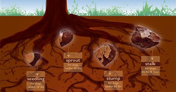 ruff roots