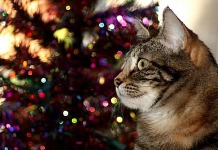 zoey-and-christmas