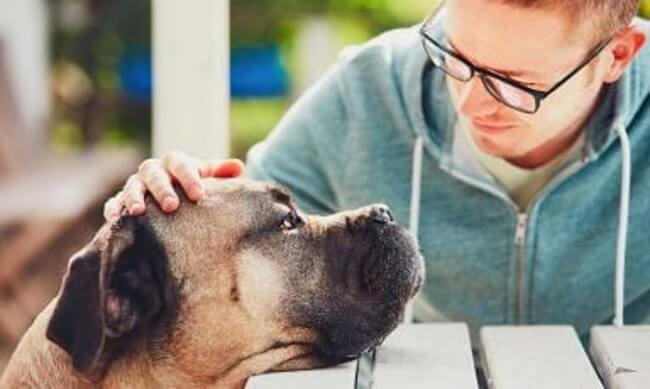 Hire a professional pet mover to avoid stress