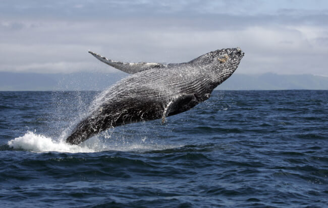 Types of whales in New Zealand