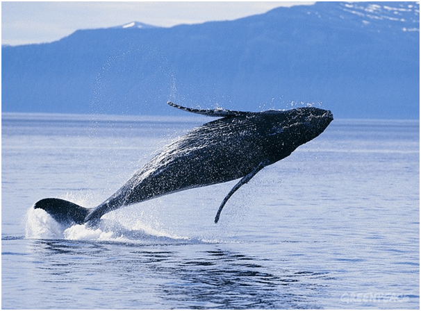 Whales to spot in New Zealand