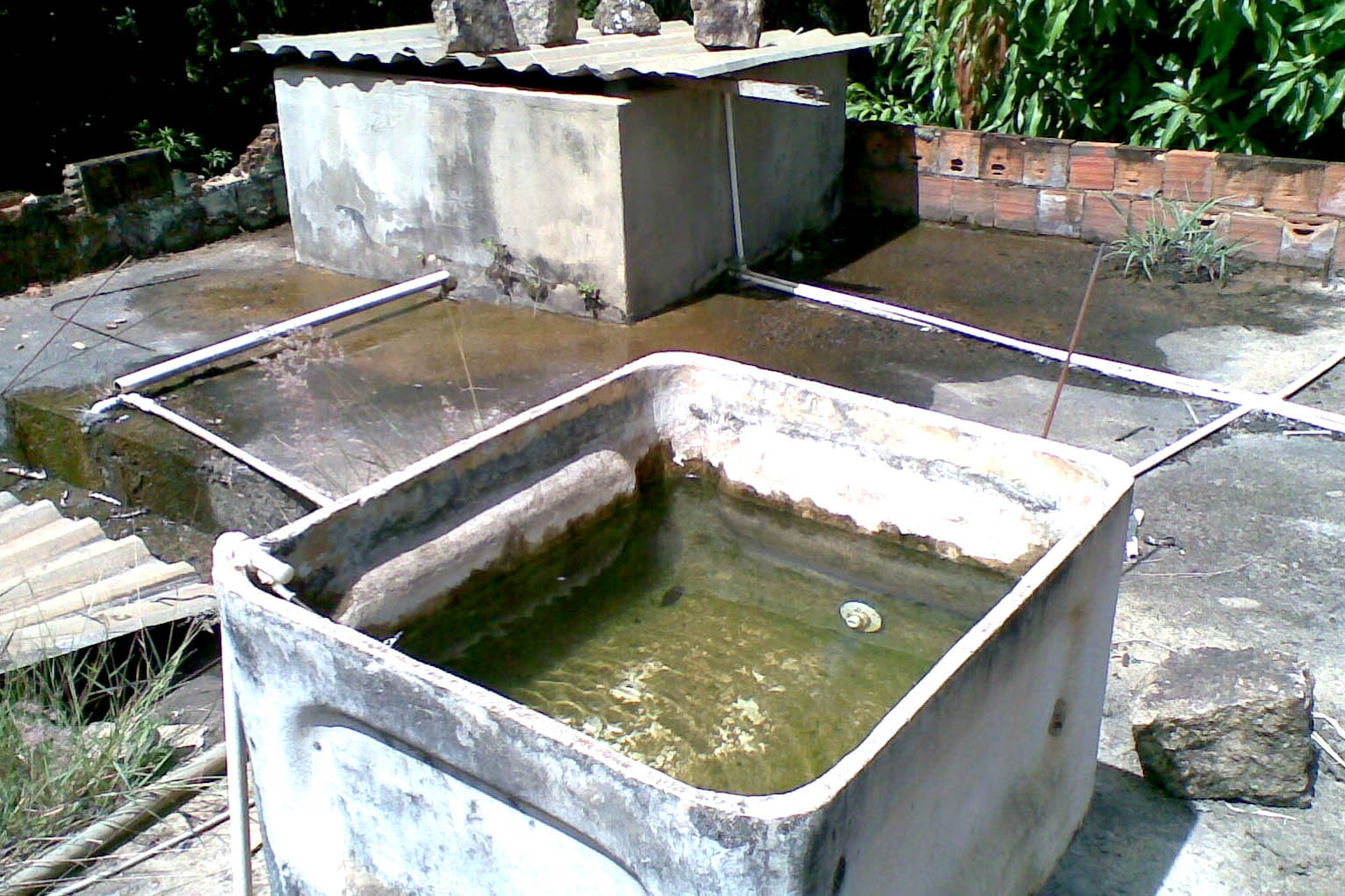 foco dengue - AGORA É LEI: Donos de casas com foco de Aedes podem ser multados