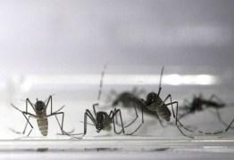 Zika vírus está presente em 21 estados brasileiros