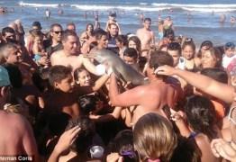 Multidão de banhistas fazem selfies com golfinho que acaba morrendo desidratado