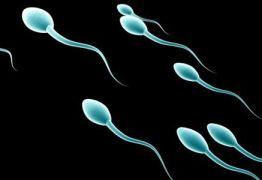 Cientistas chineses criam espermatozóides de laboratório
