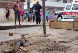 Comerciante de João Pessoa leva susto ao encontrar jacaré embaixo do carro