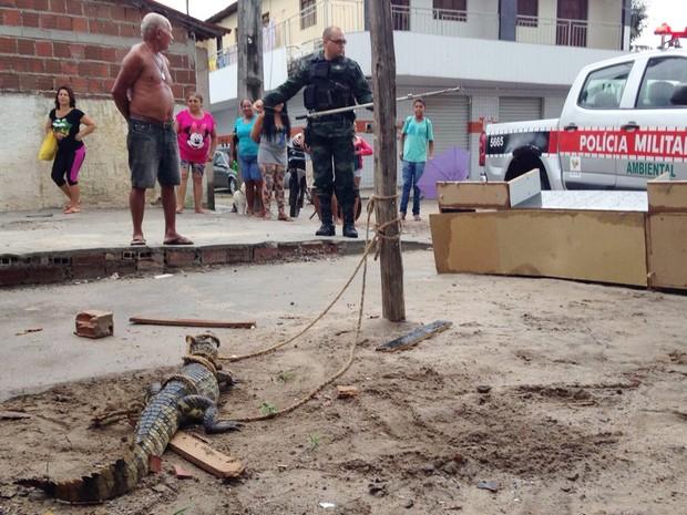 jacare carro mercadinho - Comerciante de João Pessoa leva susto ao encontrar jacaré embaixo do carro