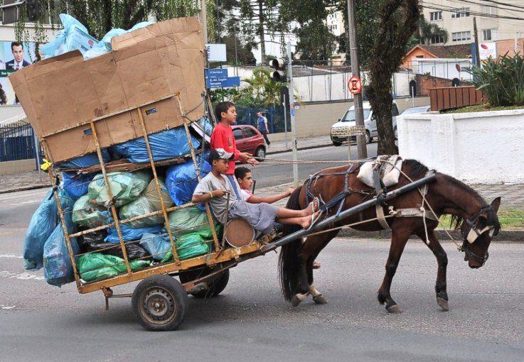 tracao animal - Veículos com tração animal serão proibido em João Pessoa
