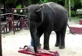 VEJA VÍDEO: Na Tailândia, elefantes fazem massagens em turistas e revoltam ativistas
