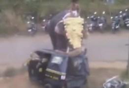 UM GIGANTE EM FÚRIA:  Em ritual elefante fica violento e ataca 27 carros e motos