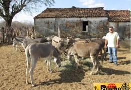 VÍDEO – Vice prefeito de município do sertão acolhe jumentos abandonados em seu sítio