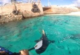 VEJA VÍDEO – Jovem usa remo para bater em tubarão e afastá-lo de caiaque