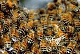 Cientistas chineses criam modelo de avião mais eficiente baseado no corpo das abelhas