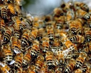 colmeia de abelhas 420 300x239 - Cientistas chineses criam modelo de avião mais eficiente baseado no corpo das abelhas