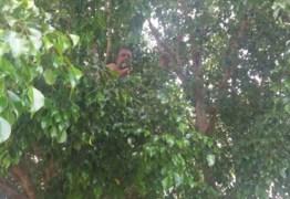 Motorista embriagado sobe em árvore para fugir da polícia no DF