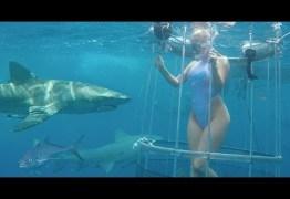 VEJA VÍDEO: Revelada verdade sobre caso da atriz pornô atacada por tubarão