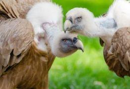 Animais utilizam homossexualidade como estratégia de sobrevivência
