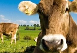 SURPREENDENTE: Norte-americanos acreditam que achocolatado vem de vacas marrons