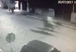 VEJA VÍDEO: Câmeras de segurança flagra racha de cavalos