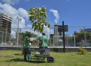 arvores 300x219 - Prefeitura de João Pessoa faz replantio de árvores nativas