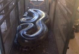 Sucuri de mais de cinco metros é encontrada no Mato Grosso