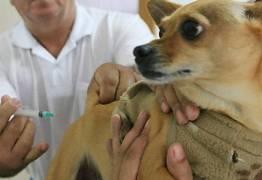 Municípios paraibanos devem imunizar 80% dos cães contra a raiva