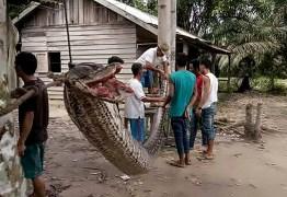 Homem vence luta com cobra gigante na Indonésia – VEJA FOTOS