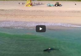 Drone flagra tubarão nadando perto de banhistas; Veja